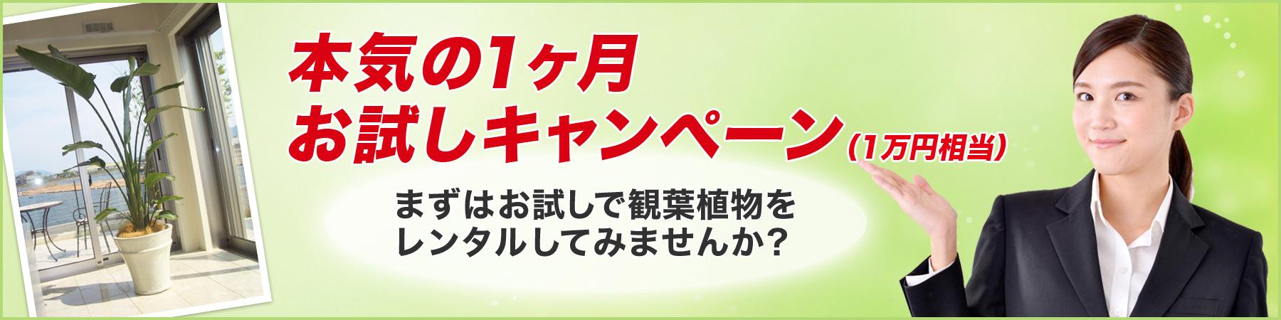 『観葉植物』の無料お試し(1ヶ月)キャンペーン