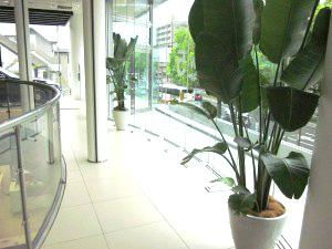 【カーショールーム】広島で観葉植物のレンタルした設置事例