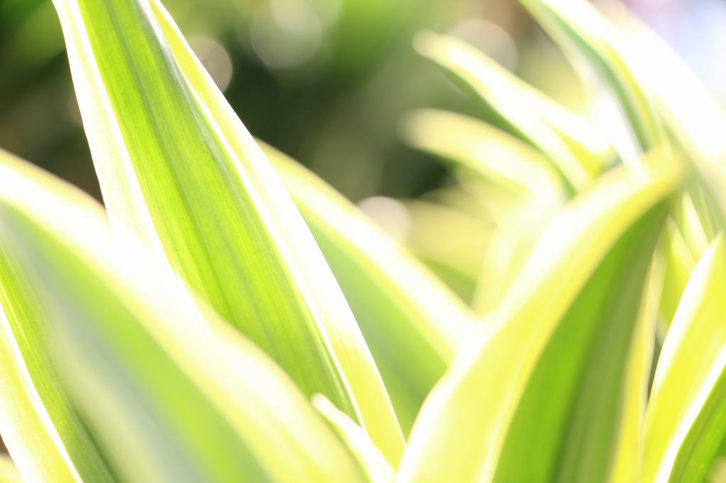広島で観葉植物のレンタルをする会社をご存知ですか?