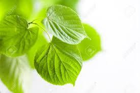 広島で観葉植物の植え替えを考えられている法人様にリフレッシュグリーン【お祝い植物などのお困り】