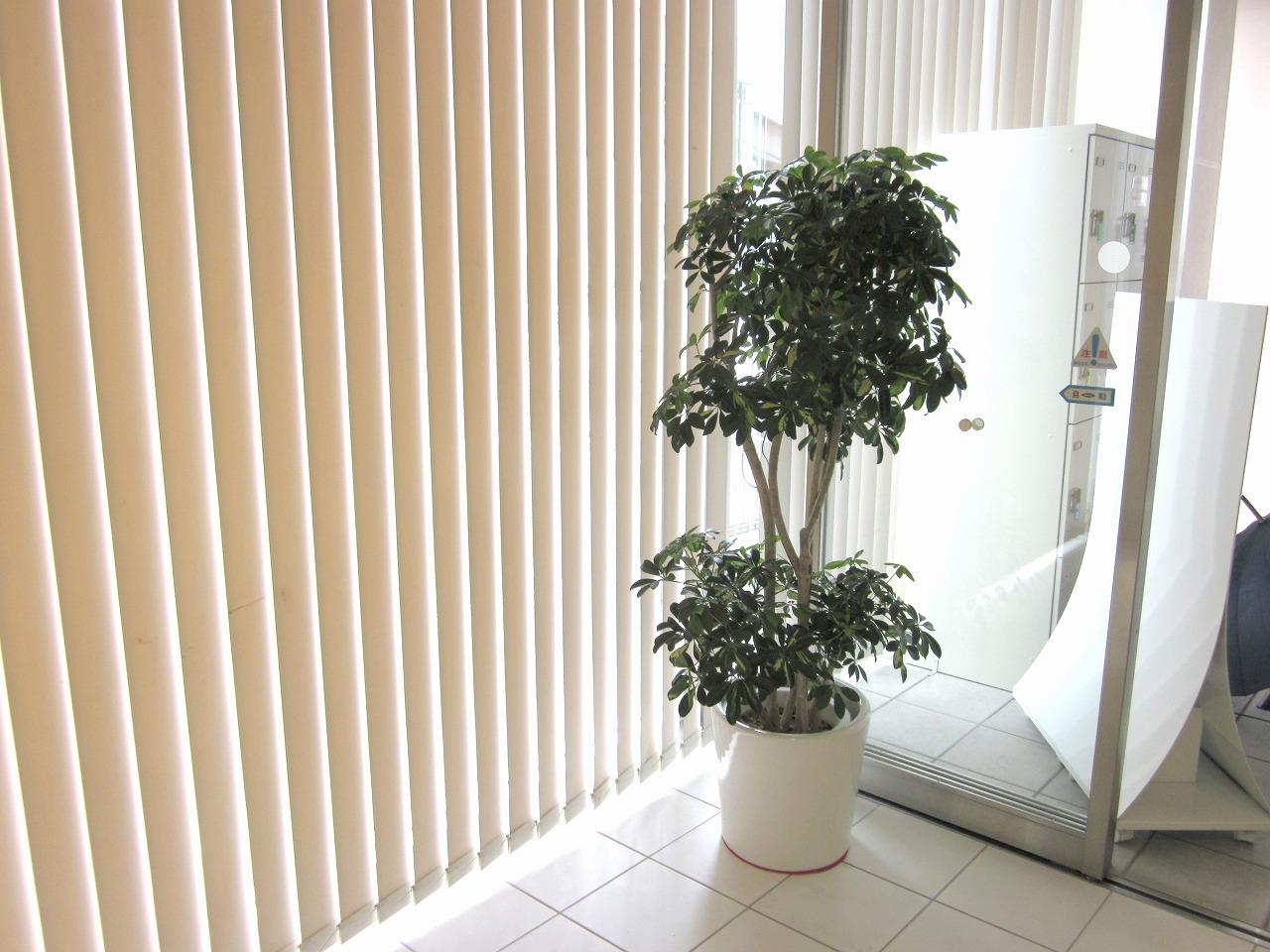 【ショールーム】広島で観葉植物のレンタルした設置事例
