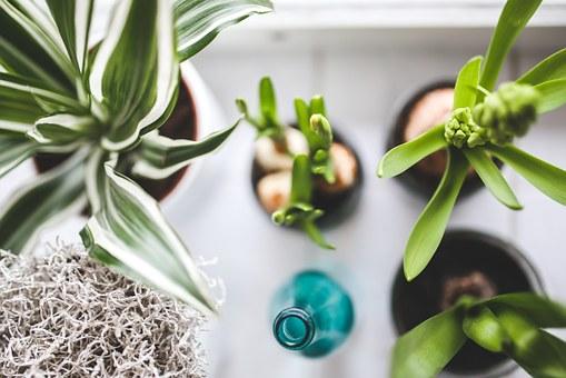 観葉植物を枯らさない水やりのコツ【広島で観葉植物レンタルするなら山田農園】