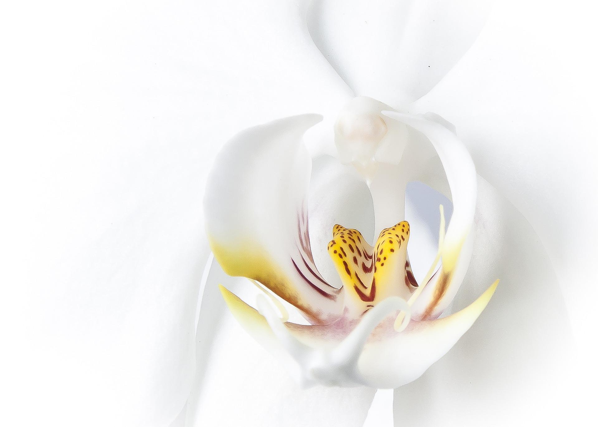 胡蝶蘭を贈る5つのメリット【広島で開店祝い】